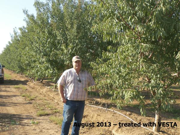 almonds-2013-vesta-treated