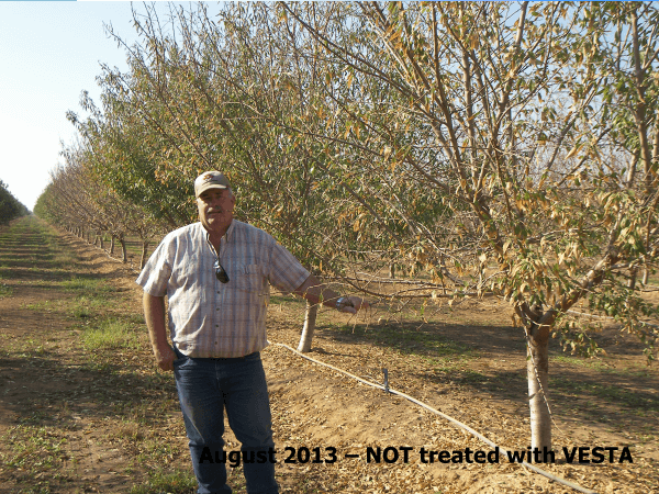 almonds-2013-not-vesta-treated